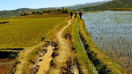 Madagascar_farming